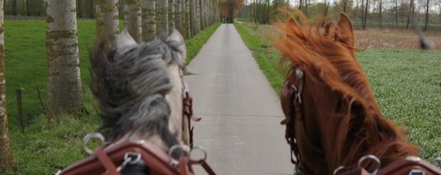 2012-04-25-21-40-46.einde paarden